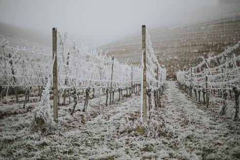 Germany, Ortenberg, vineyard in winter - DWF00249
