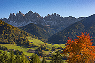 Italy, South Tyrol, Funes Valley, Odle group in autumn - LOMF00476