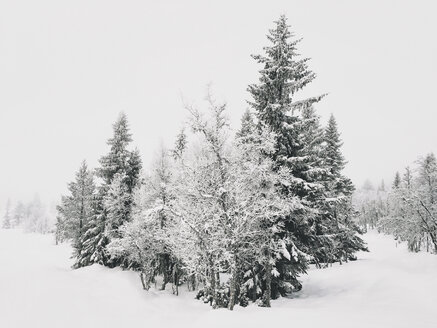 Norway, Oppland, trees in pristine winter landscape - JUBF00191