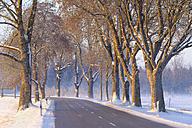 Germany, Gebrazhofen, treelined county road in winter - SIEF07273