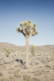 USA, California, Death Valley National Park, cactus - EPF00300