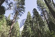 USA, California, Yosemite National Park, scenic - EPF00306