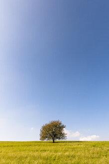 Germany, Hesse, single tree in field - EGBF00191