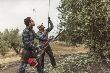 Spain, men using vibrator and stick for olive harvest - JASF01474