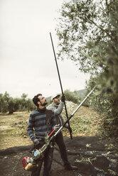 Spain, men using vibrator and wooden stick for olive harvest - JASF01480
