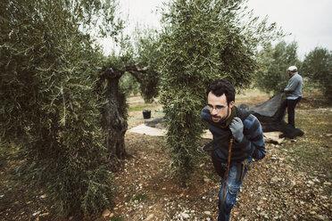 Spain, man pulling net in olive grove - JASF01483