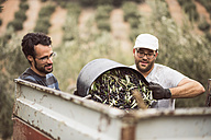 Spain, two men throwing harvested black olives into trailer - JASF01498