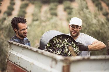 Spain, two men throwing harvested black olives into trailer - JASF01498
