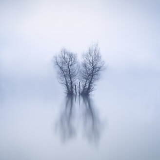 Bare trees standing in lake at wintertime - XCF00132