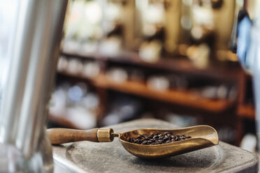 Shovel with coffee beans in a coffee roastery - KNSF00954