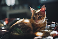 Kitten lying on bed - RAEF01737