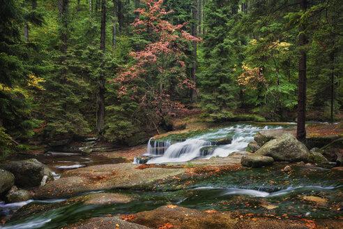 Poland, Sudeten Mountains, Szklarka Stream in autumn scenery of mountain forest - ABOF00153