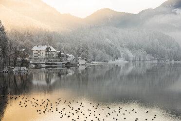 Germany, Lake Kochel in winter - FCF01161