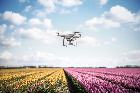 Netherlands, drone with camera flying over tulip fields - REAF00168