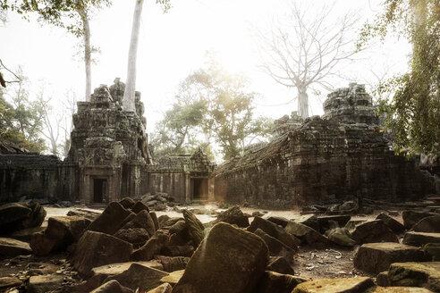Cambodia, Angkor, Ta Prohm temple, Tomb Raider film location - REAF00191