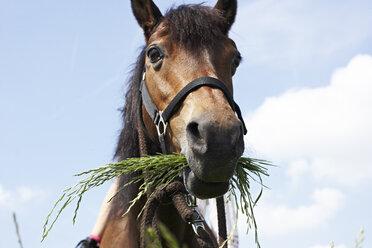 Portrait of eating horse - FSF00777