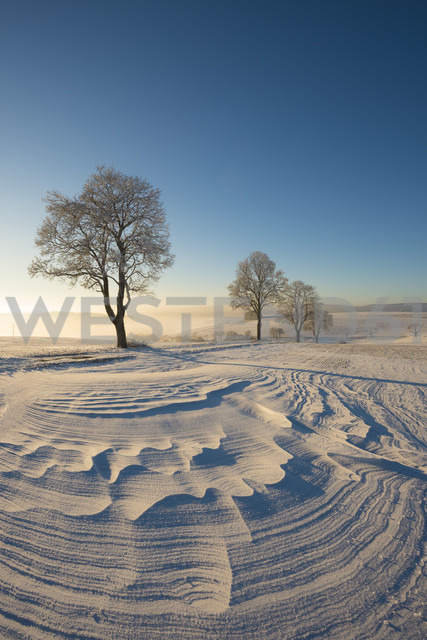 Germany, Baden-Wuerttemberg, Constance district, winter landscape with snowdrift - ELF01834