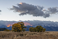 USA, Wyoming, Rocky Mountains, Grand Teton National Park, aspens in autumn at sunset - FOF08854