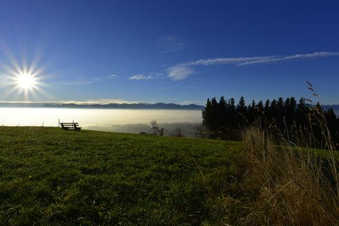 Germany, Allgaeu, Alpine meadow at backlight - FDF00216