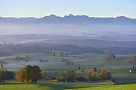 Germany, Allgaeu, autumnal landscape at morning mist - FDF00222