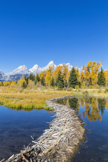 USA, Wyoming, Grand Teton National Park, Snake River with beaver dam and Teton Range in the background - FOF08897