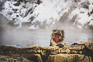 Japan, Yamanouchi, Jigokudani Monkey Park, portrait of bathing red-faced makak - KEBF00493