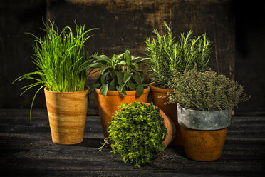 Flowerpots with various fresh herbs on dark wood - MAEF12154