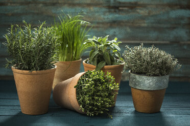 Flowerpots with various fresh herbs on wood - MAEF12157