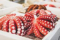 Japan, Tokyo, Tsukiji fish market, octopuses - KEBF00501