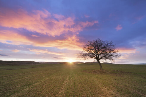 Spain, idyllic sunset in rural landscape with single bare tree - DHCF00063