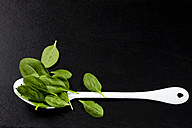 Leaf spinach and white spoon on slate - CSF27881