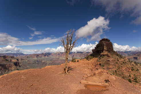 USA, Nevada, Grand Canyon National Park, dead tree - LMF00700