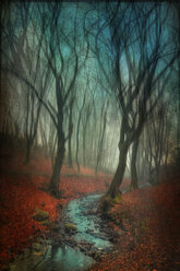 Germany, Wuppertal, stream in autumn forest, manipulated photography - DWIF00829