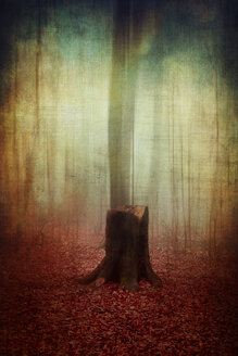 Germany, Wuppertal, tree stump in autumn forest, manipulated photography - DWIF00832