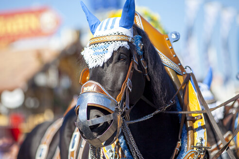 Germany, Munich, portrait of decorated horse at Oktoberfest - MMAF00047