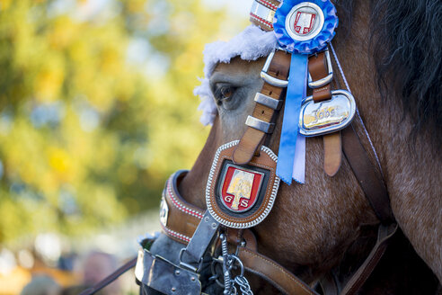 Germany, Munich, head of decorated horse at Oktoberfest - MMA00050