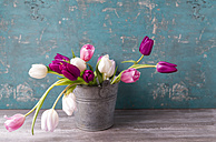 Tulips in a pail - MYF01881