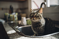 Portrait of tabby cat sitting in the kitchen sink - RAEF01766
