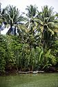 Indonesia, Java, tropical vegetation at riverside - KNTF00663