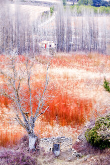 Spain, Cuenca, Wicker cultivation in Canamares in winter - DSGF01534