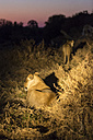 Botswana, Tuli Block, two lions at night - SRF00859