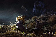 Botswana, Tuli Block, lion cub lying on dead wood at night - SRF00880