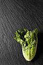 Romaine lettuce on slate - CSF28034