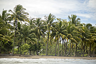 Indonesia, Java, coastline with palms seen from the ocean - KNTF00732