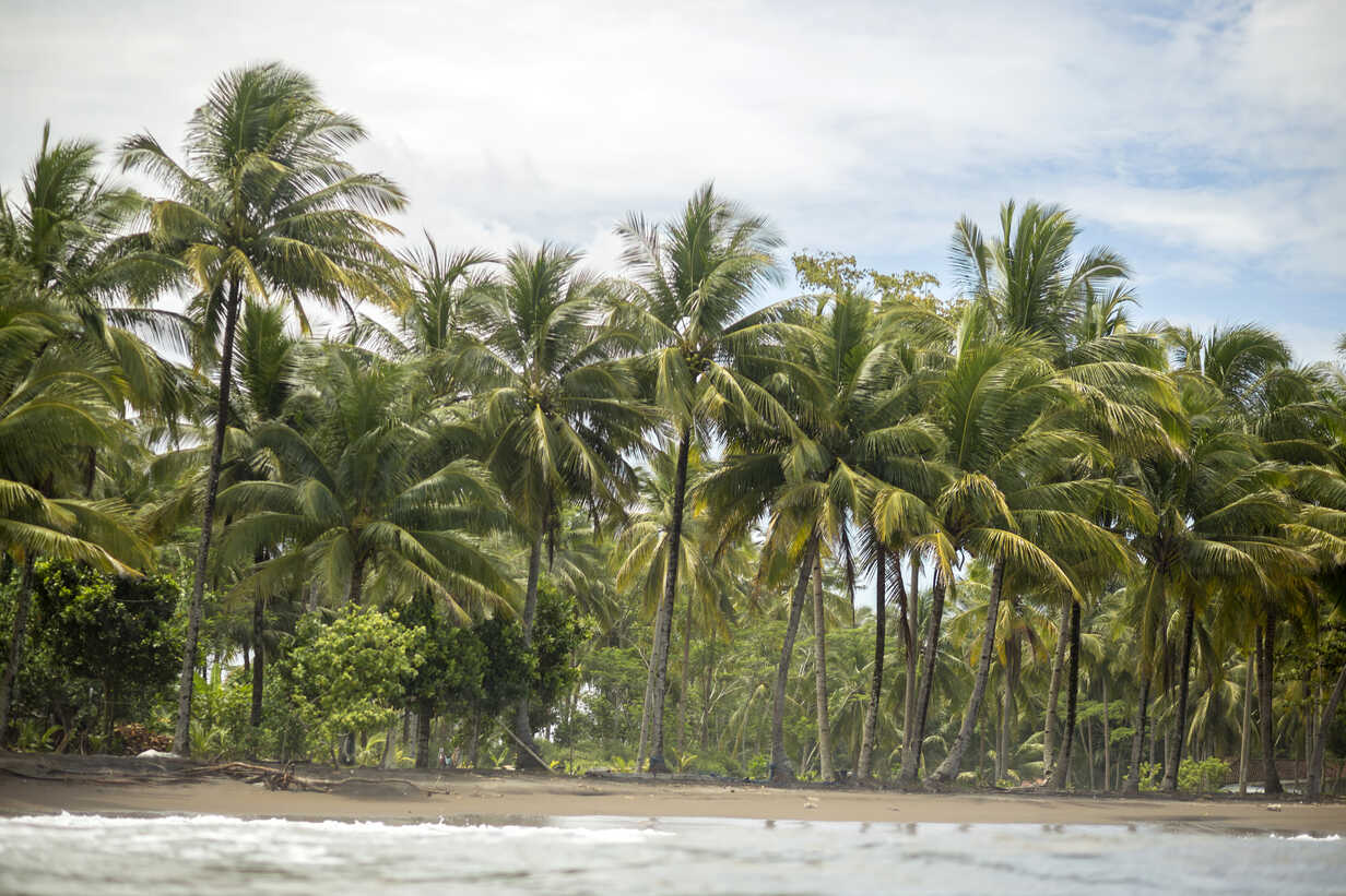 Indonesia, Java, coastline with palms seen from the ocean - KNTF00732 - Konstantin Trubavin/Westend61