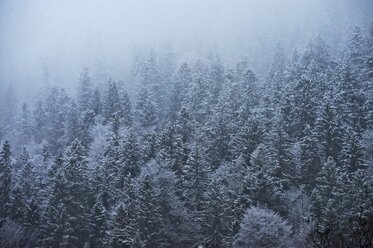Germany, Bavaria, forest in winter - MRF01714