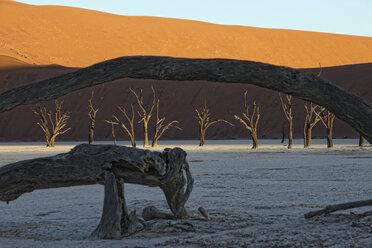 Namibia, Namib-Naukluft Park, Dead Vlei, dead trees in front of desert dune - DSGF01603