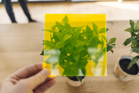 Hand holding toned glass in front of potted plant - KNSF01162
