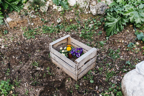 Flowers in a crate in garden - JRFF01257