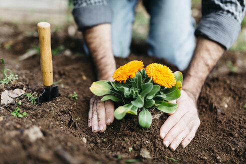 Man planting flowers in his garden - JRFF01263